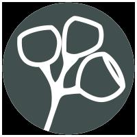 Yellow Stringybark icon